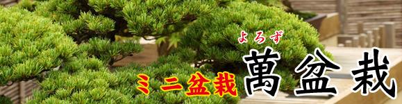 ミニ盆栽専門店「萬(よろず)盆栽」